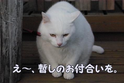 1落語01