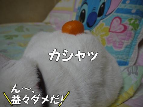 1あけおめ13