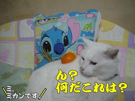 1あけおめ21