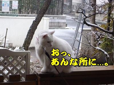 1雪遊び31