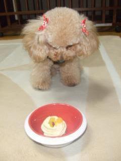 ケーキおあずけ