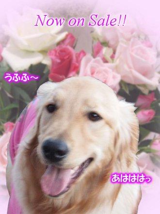 七菜笑顔Sale