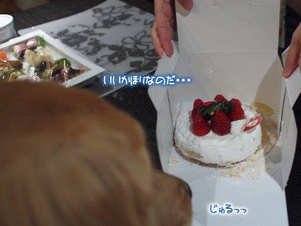 ケーキ覗き見