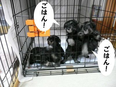 ダイアンっ子11月19日2-s