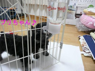 ダイアン子2009.12.12 (1)