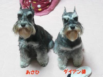 ダイアン&あさひ2月7日
