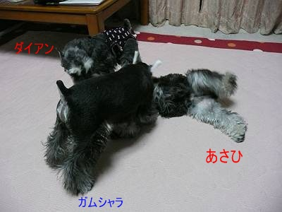 あさひ&ガムシャラ11月30日-s