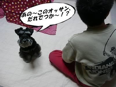 チャッピーちゃん12月30日1-s