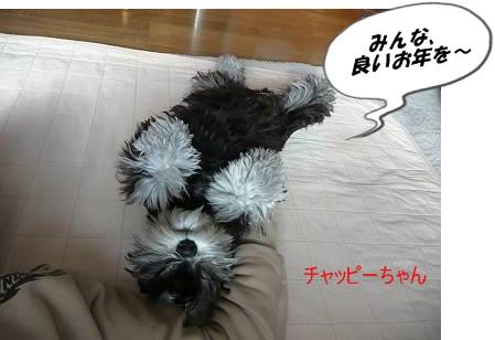 チャッピーちゃん12月31日1-s