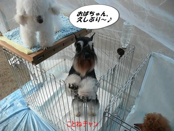ことねチャン2月16日-s