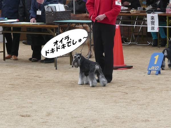 ガムシャラ松山ショー2月17日-s