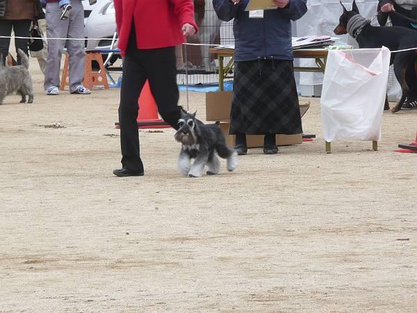 ガムシャラ松山ショー2月17日3-s