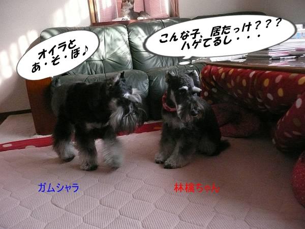 林檎ちゃん2月28日1-s