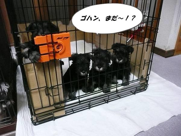 雅っ子3月7日1-s