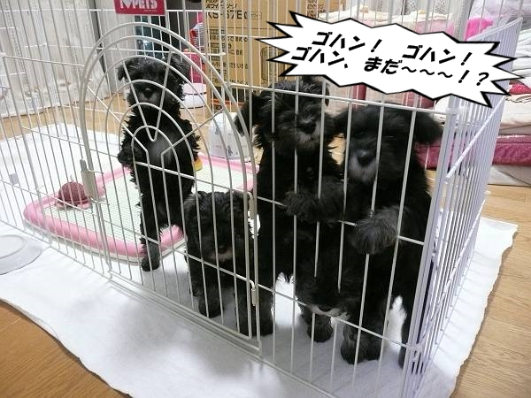 雅っ子3月20日-s