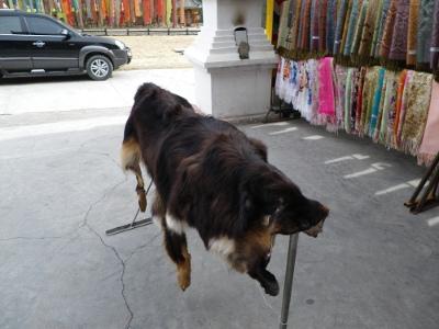 チベタン・マスティフ2