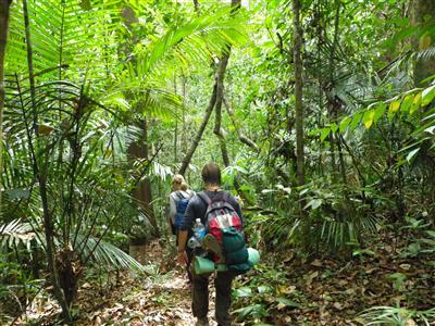 ジャングル1