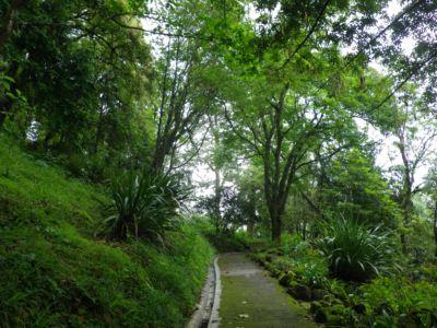 ダージリン植物園1
