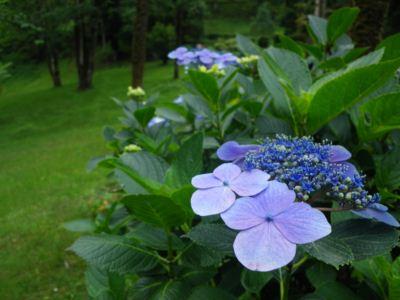 ダージリン植物園3