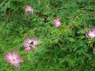 ダージリン植物園4