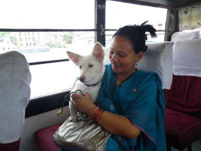 バスに乗る犬