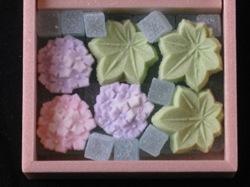 紫陽花 楓