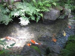 瓢亭 庭 鯉