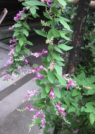 梨木神社 萩2