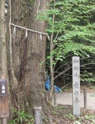 梨木神社 愛の木 葉