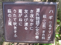 ハギ 源氏物語