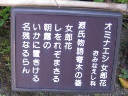 オミナエシ 源氏物語