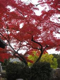 黒谷 紅葉
