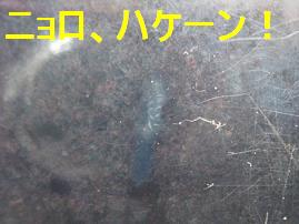 IMG_3533-1.jpg