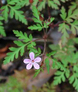 香美町石垣の花