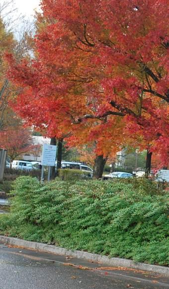 ホテル近く紅葉