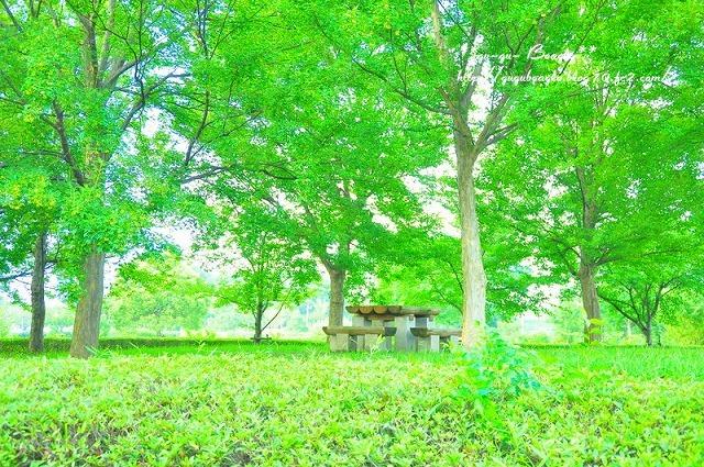 16_20110825202522.jpg