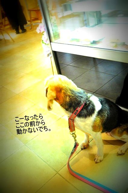 16_20120227003530.jpg