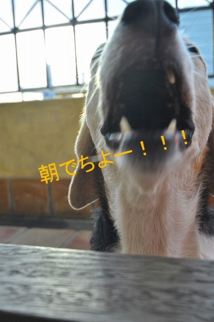 1_20110724073109.jpg