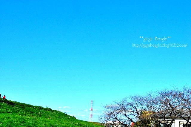 1_20111217183100.jpg