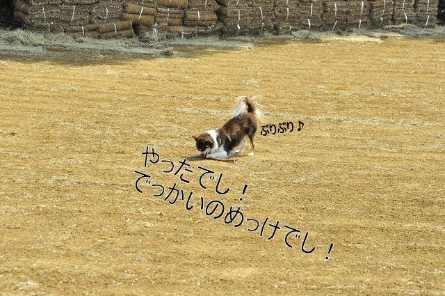 20_20120316190451.jpg