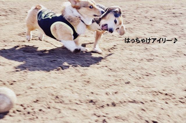 4_20120130215658.jpg