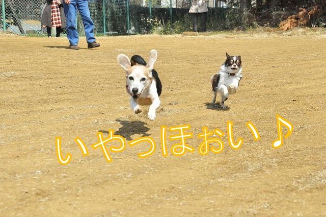 7_20120316185855.jpg