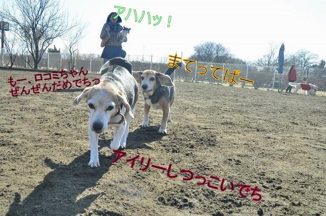 9_20120201211241.jpg