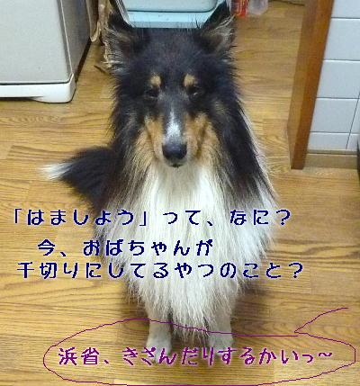 110428_04_20110428142618.jpg