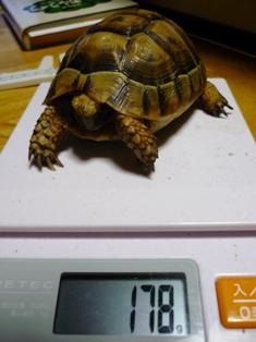 トープ体重計
