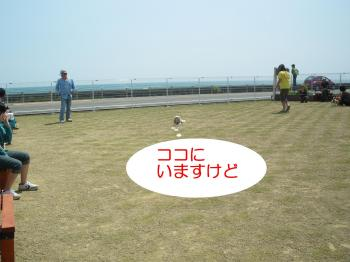 IMGP2292_convert_20100502232127.jpg