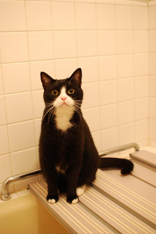 hachi in the bath?