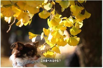 コピー (10) ~ 紅葉