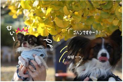 コピー (11) ~ 紅葉
