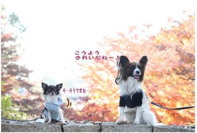 コピー (8) ~ 紅葉